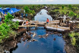 BRGM to apply Jokowi-directed strategies to rehabilitate  mangrove