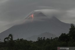 Forest restoration following Mount Merapi eruption to take few years